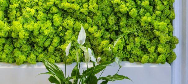 Стабилизированные растения: что это такое и как их применять