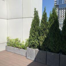 Растения в кашпо, Кашпо из бетона